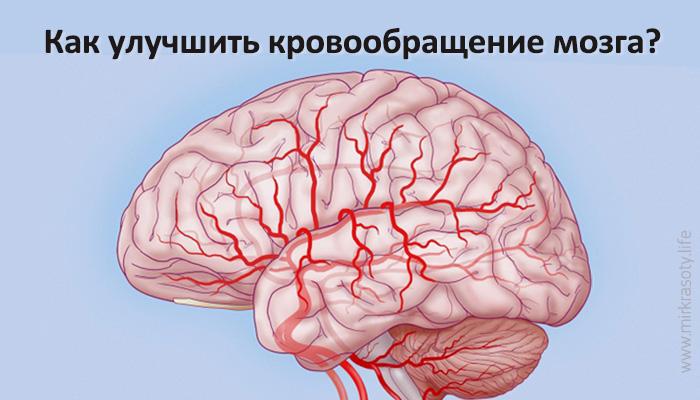 Как улучшить кровообращение мозга